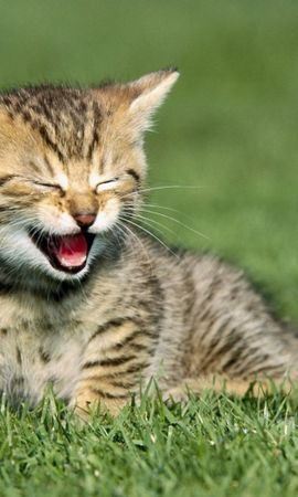 9685 download wallpaper Funny, Animals, Cats screensavers and pictures for free