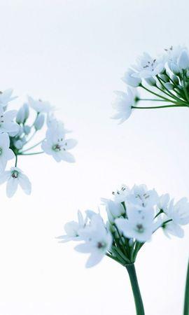 41232 télécharger le fond d'écran Plantes, Fleurs - économiseurs d'écran et images gratuitement