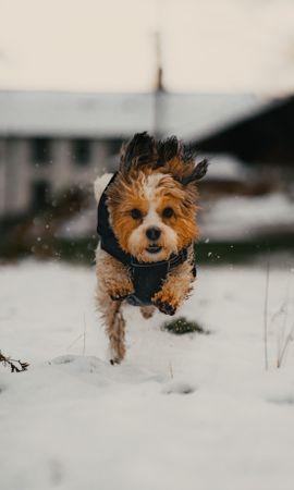 65296 Screensavers and Wallpapers Funny for phone. Download Animals, Dog, Puppy, Funny, Snow pictures for free