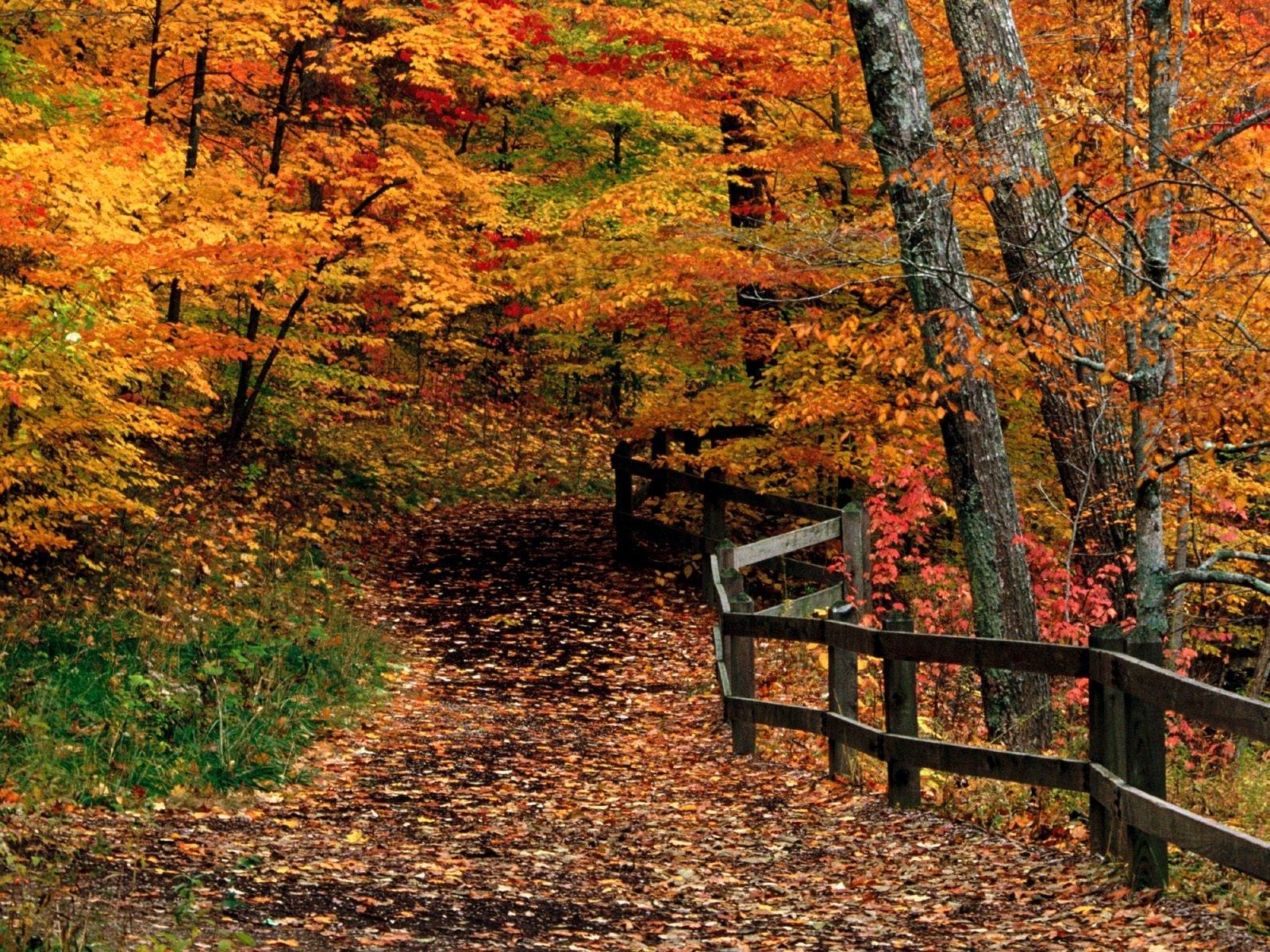 9320 скачать обои Пейзаж, Деревья, Осень - заставки и картинки бесплатно