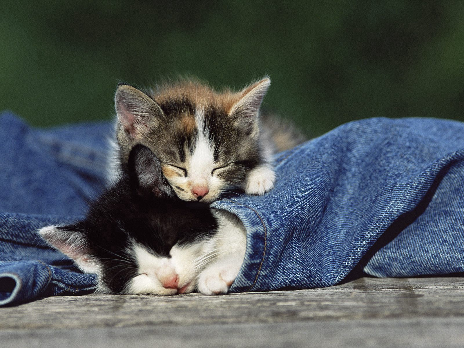 Download mobile wallpaper Animals, Couple, Pair, Spotted, Spotty, Kittens, Jeans for free.