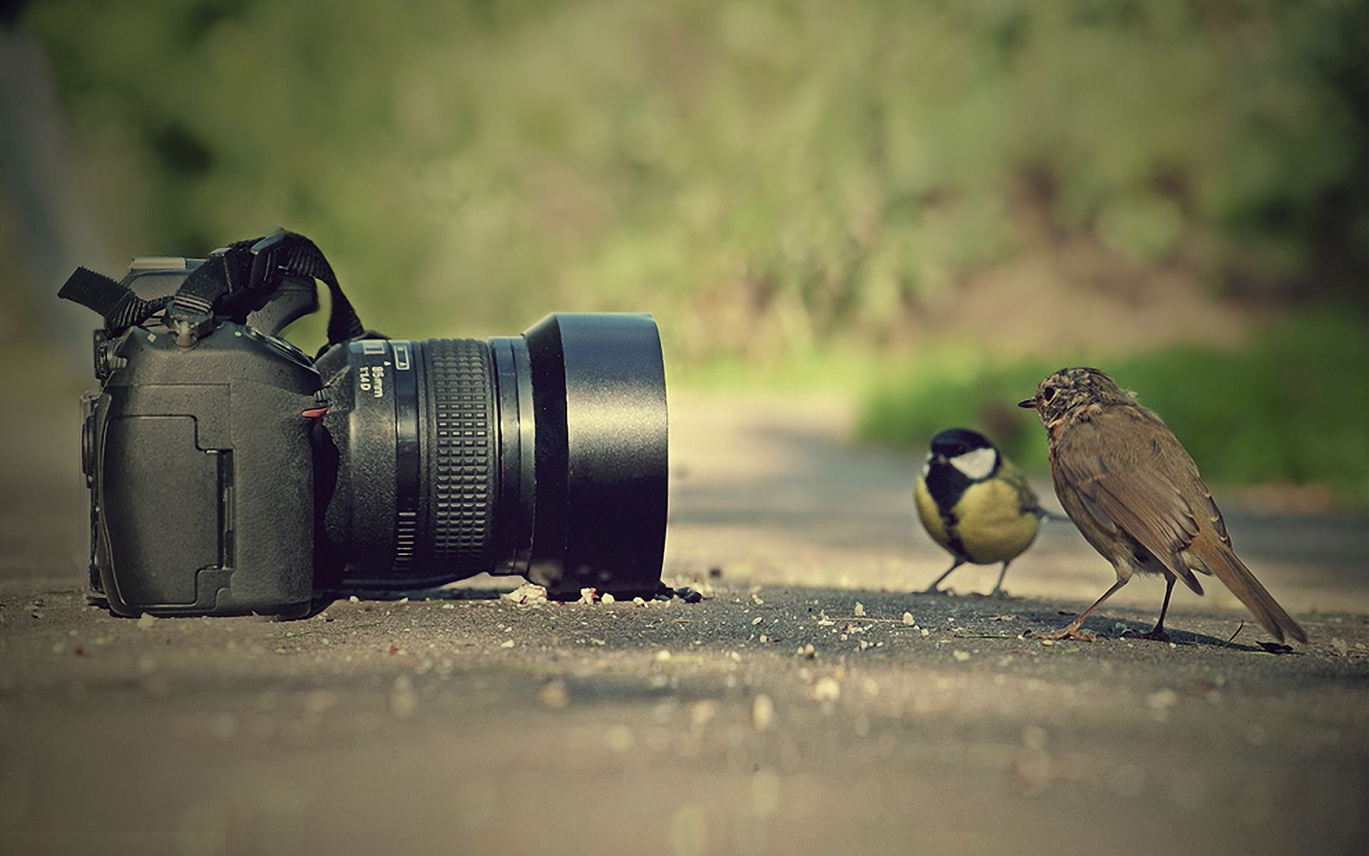 95776 download wallpaper Animals, Birds, Sparrow, Camera, Tit, Titica, Pose screensavers and pictures for free