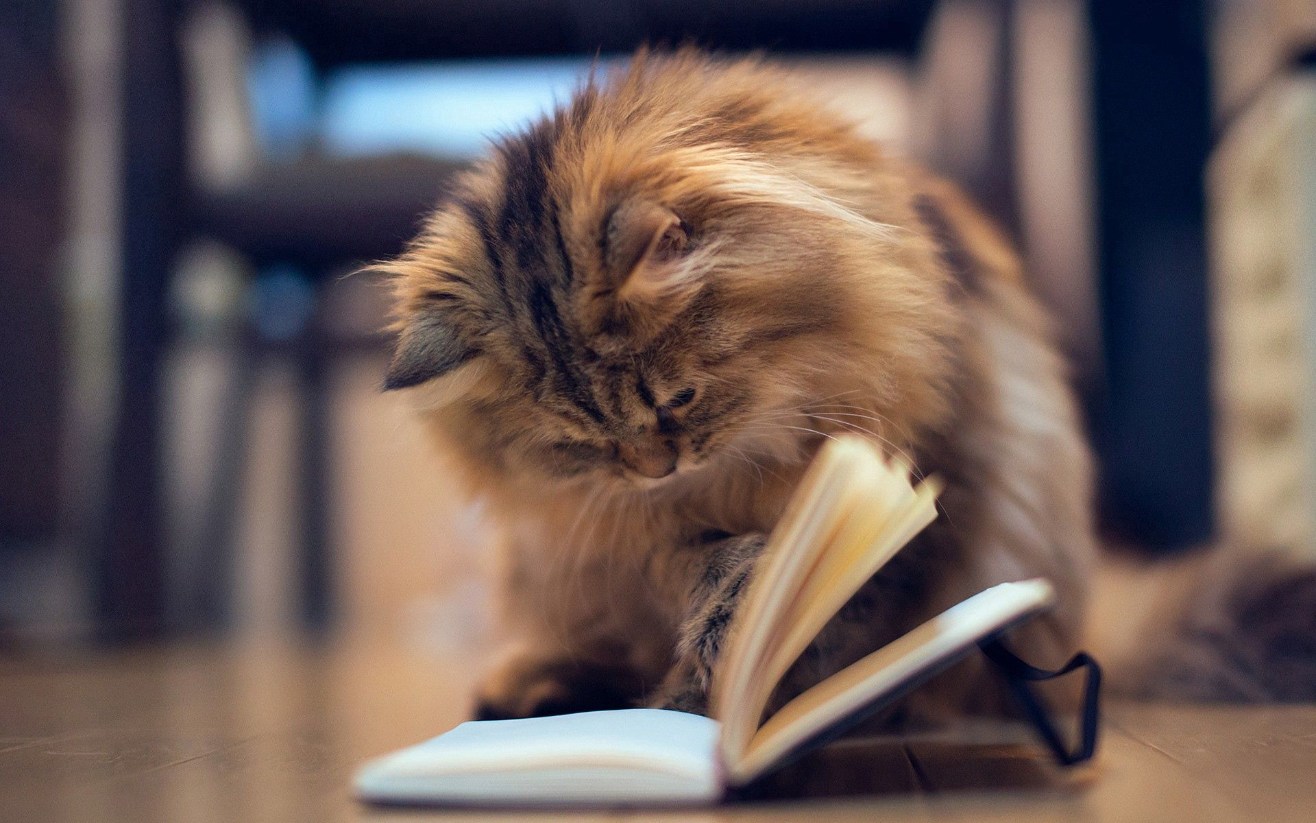 66872 Screensavers and Wallpapers Book for phone. Download Animals, Cat, Fluffy, Book pictures for free