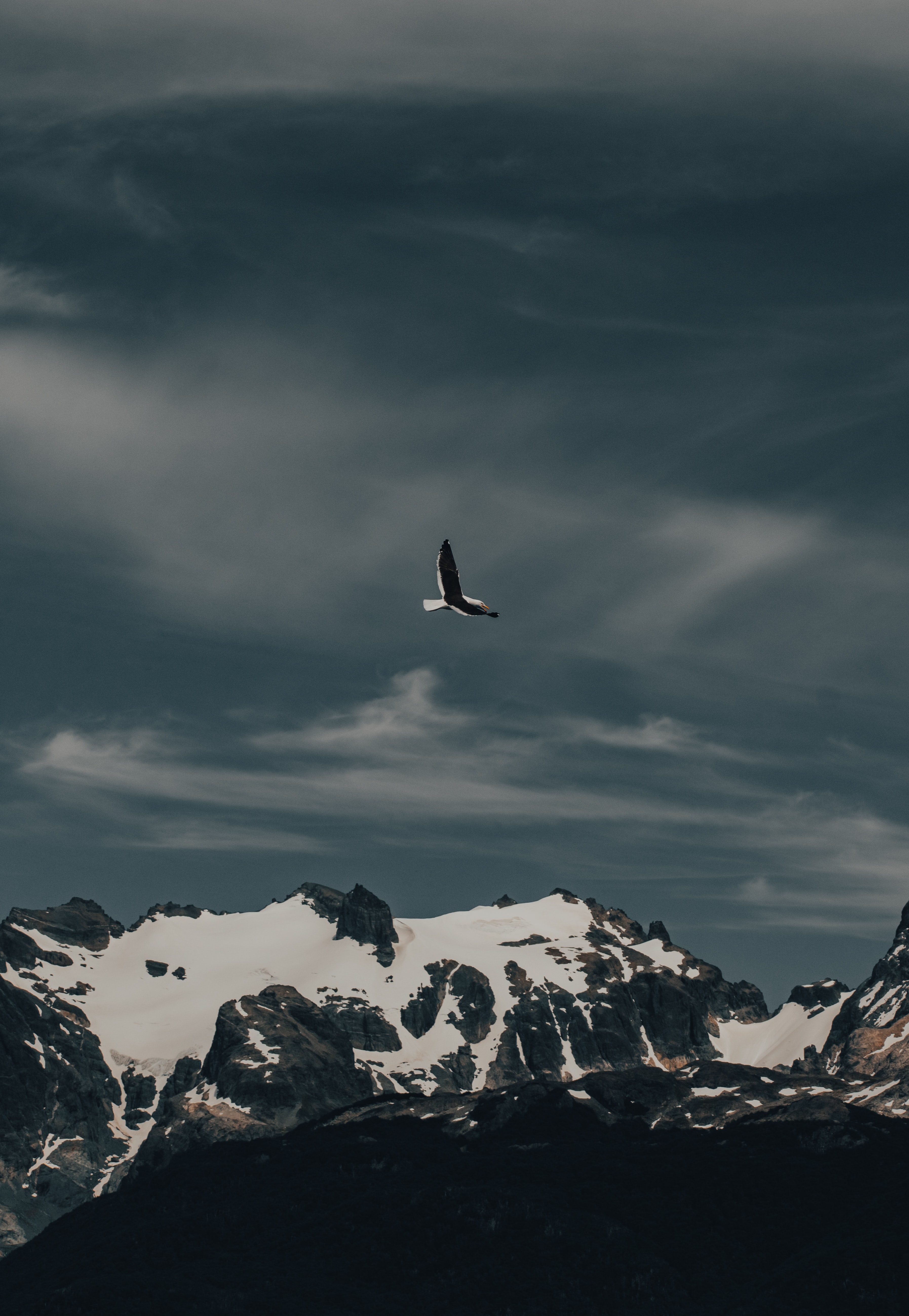 52699 Screensavers and Wallpapers Flight for phone. Download Animals, Nature, Mountain, Bird, Flight, Gull, Seagull pictures for free