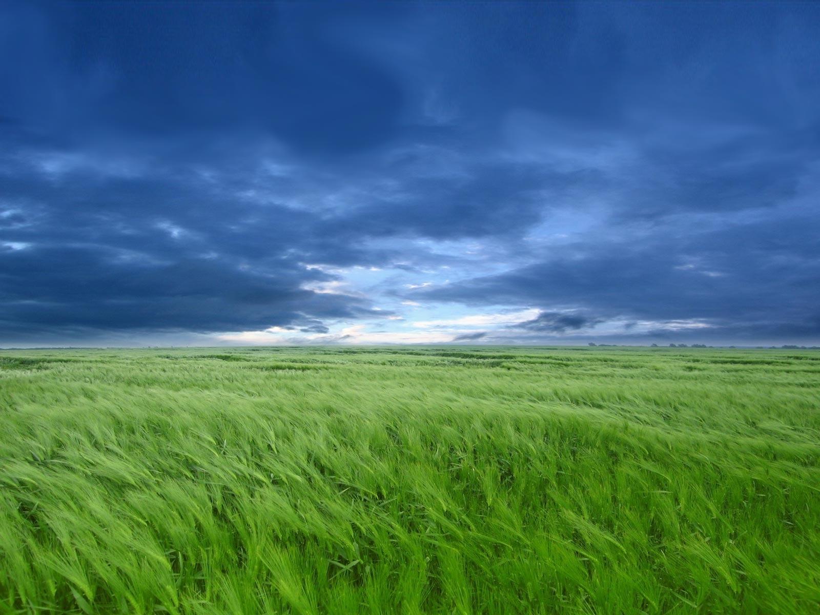 1083 скачать обои Пейзаж, Трава, Небо, Арт - заставки и картинки бесплатно