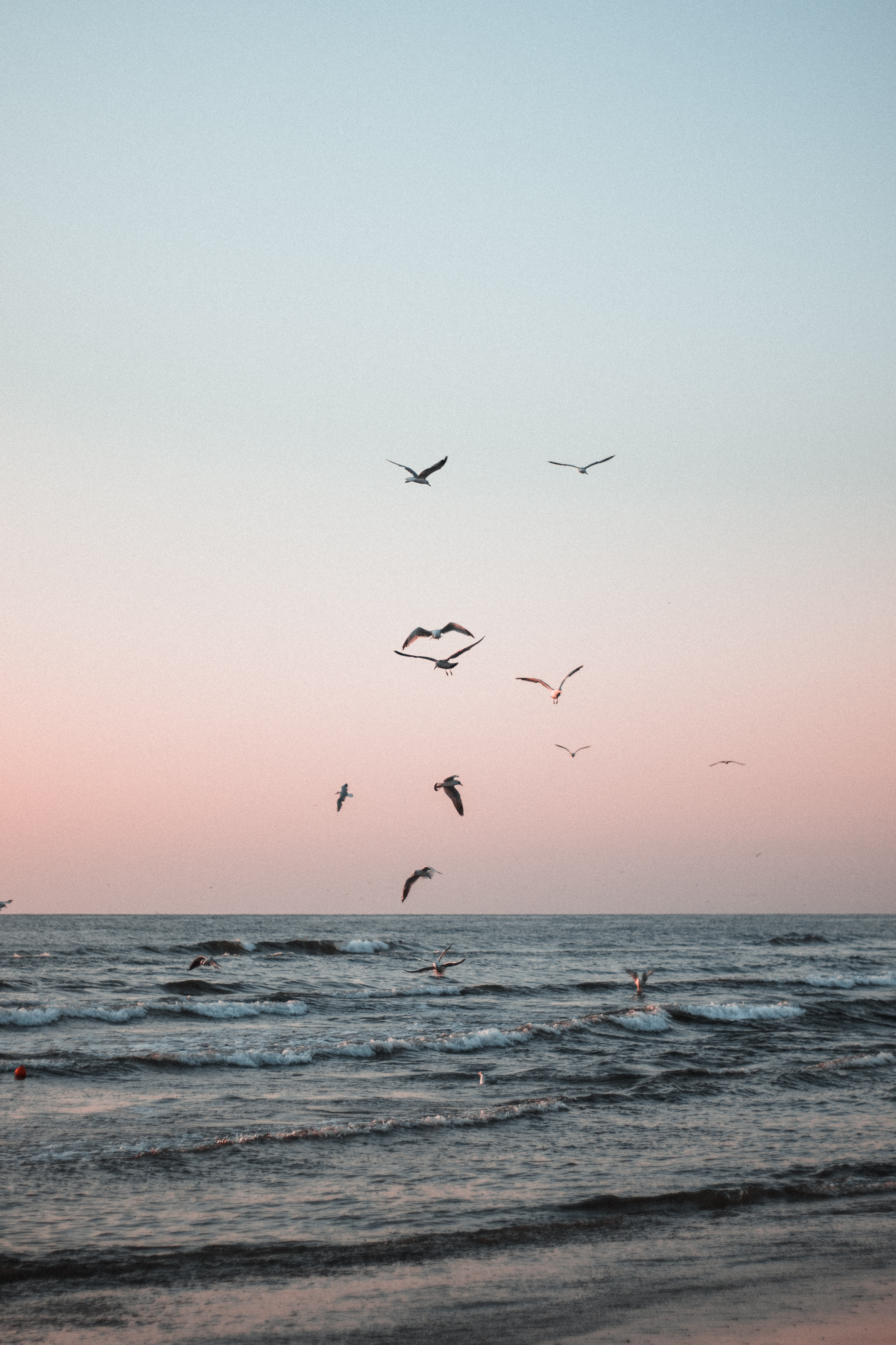148158 download wallpaper Nature, Sea, Coast, Waves, Birds, Seagulls screensavers and pictures for free