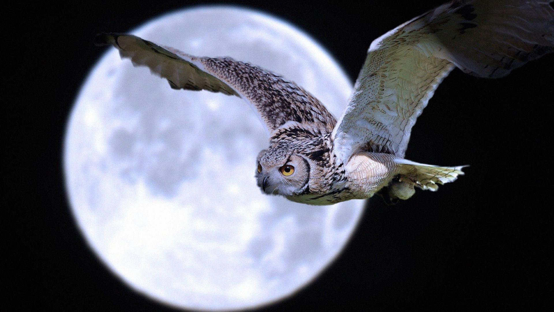 111454 скачать обои Луна, Хищник, Животные, Полет, Сова, Птица - заставки и картинки бесплатно