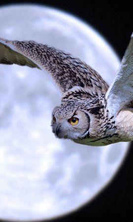 111454 baixar papel de parede Animais, Coruja, Mocho, Pássaro, Predator, Predador, Lua, Voar, Voo - protetores de tela e imagens gratuitamente
