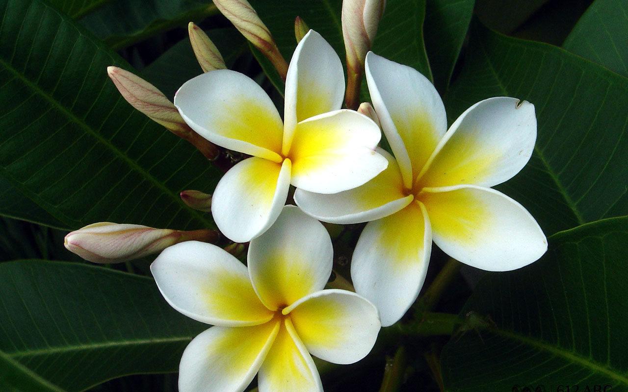 15779 descargar fondo de pantalla Plantas, Flores: protectores de pantalla e imágenes gratis