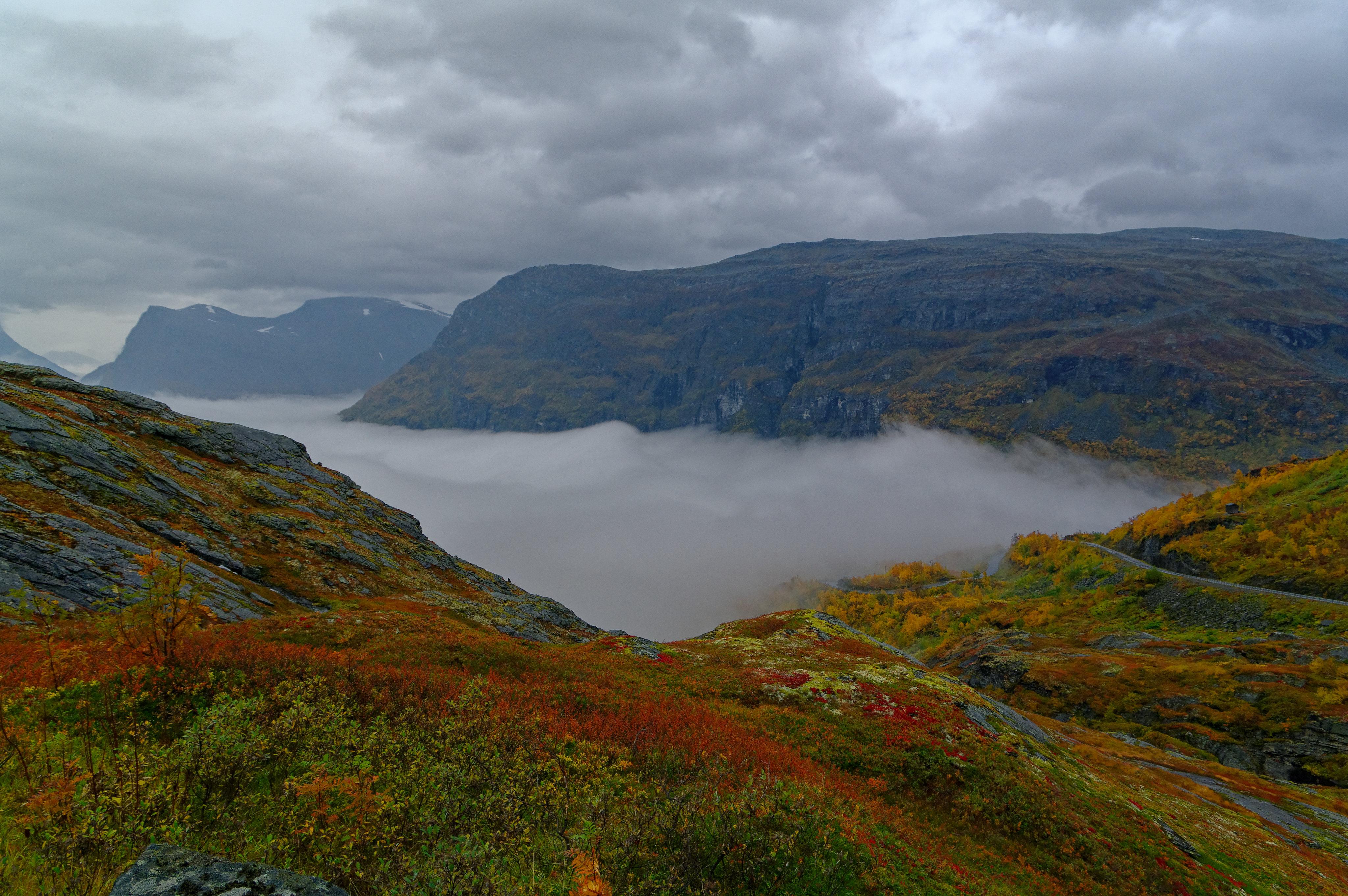96197 скачать обои Природа, Скалы, Тайга, Трава, Туман, Горы - заставки и картинки бесплатно