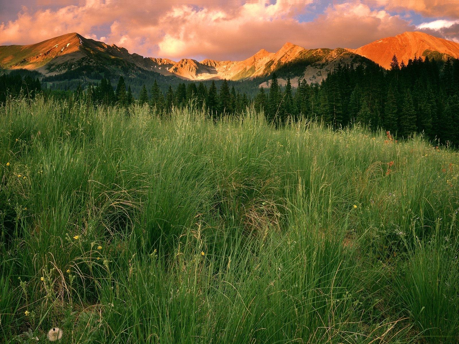 1036 скачать обои Пейзаж, Трава, Горы - заставки и картинки бесплатно