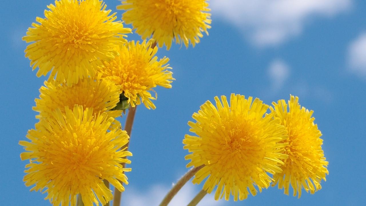 49738 скачать обои Растения, Цветы - заставки и картинки бесплатно