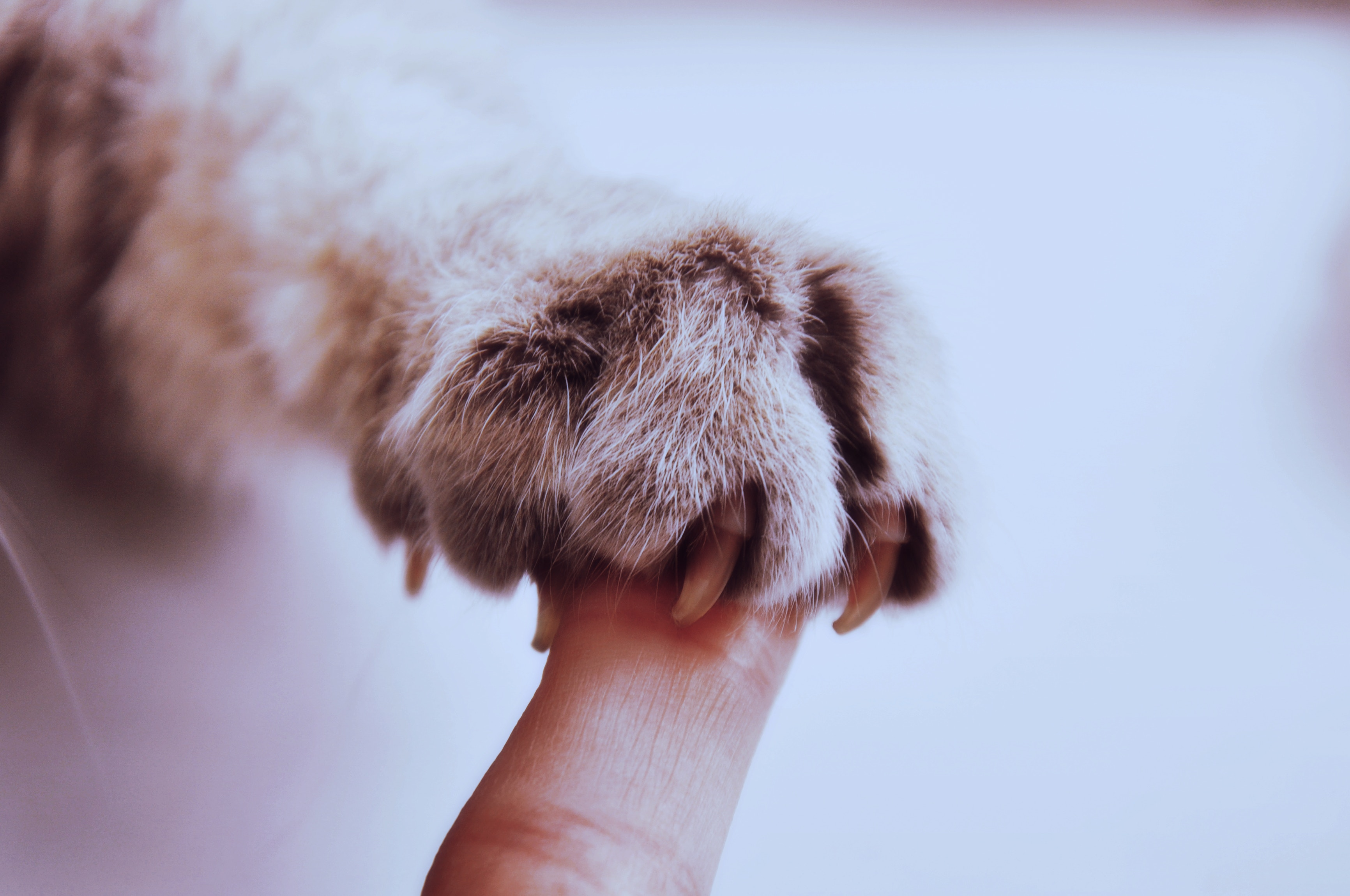 118532 download wallpaper Animals, Paw, Claws, Cat, Finger, Friendship screensavers and pictures for free