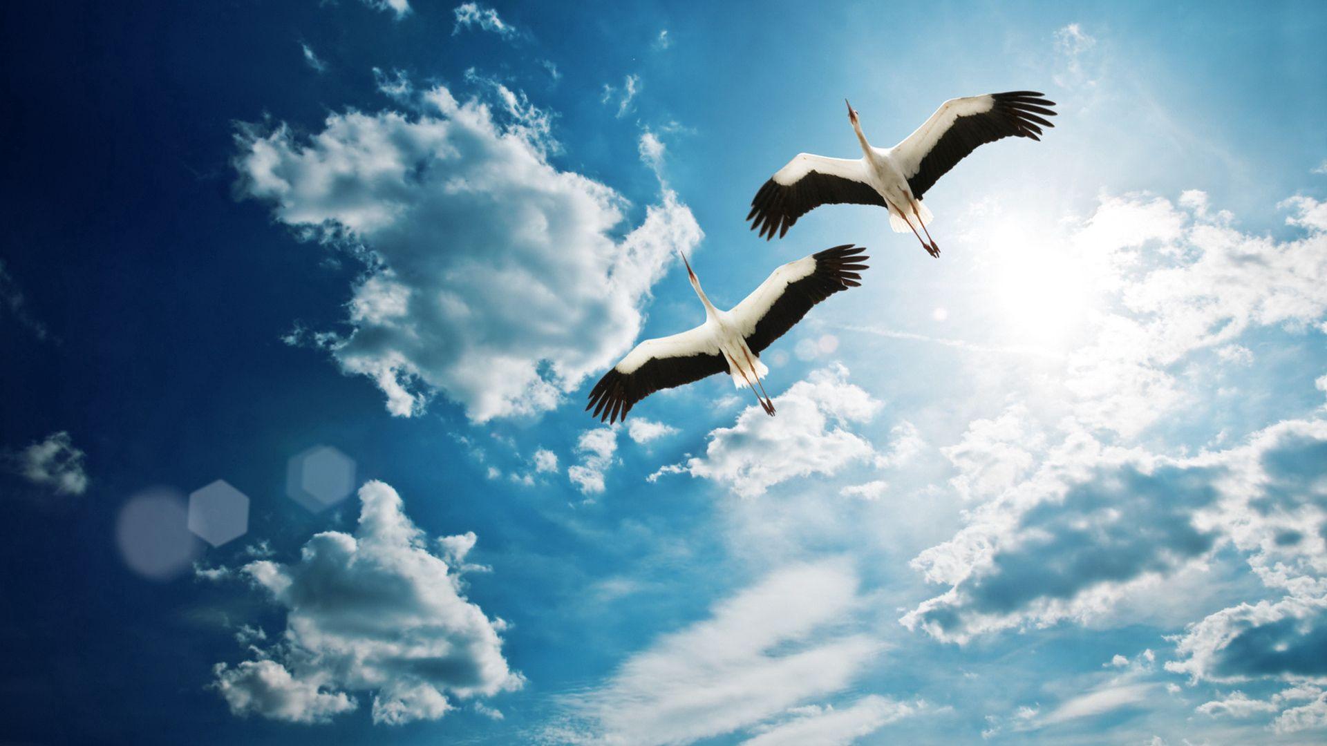 141005 Hintergrundbild herunterladen Tiere, Vögel, Sky, Cranes, Flug - Bildschirmschoner und Bilder kostenlos