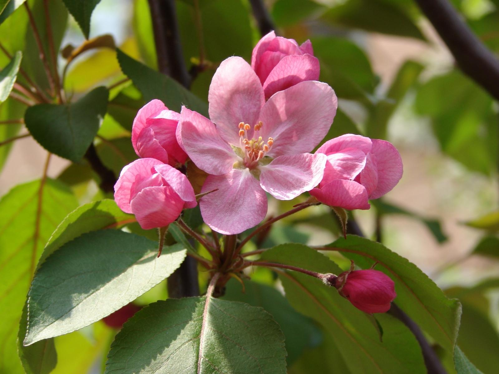 9162 скачать обои Растения, Цветы - заставки и картинки бесплатно
