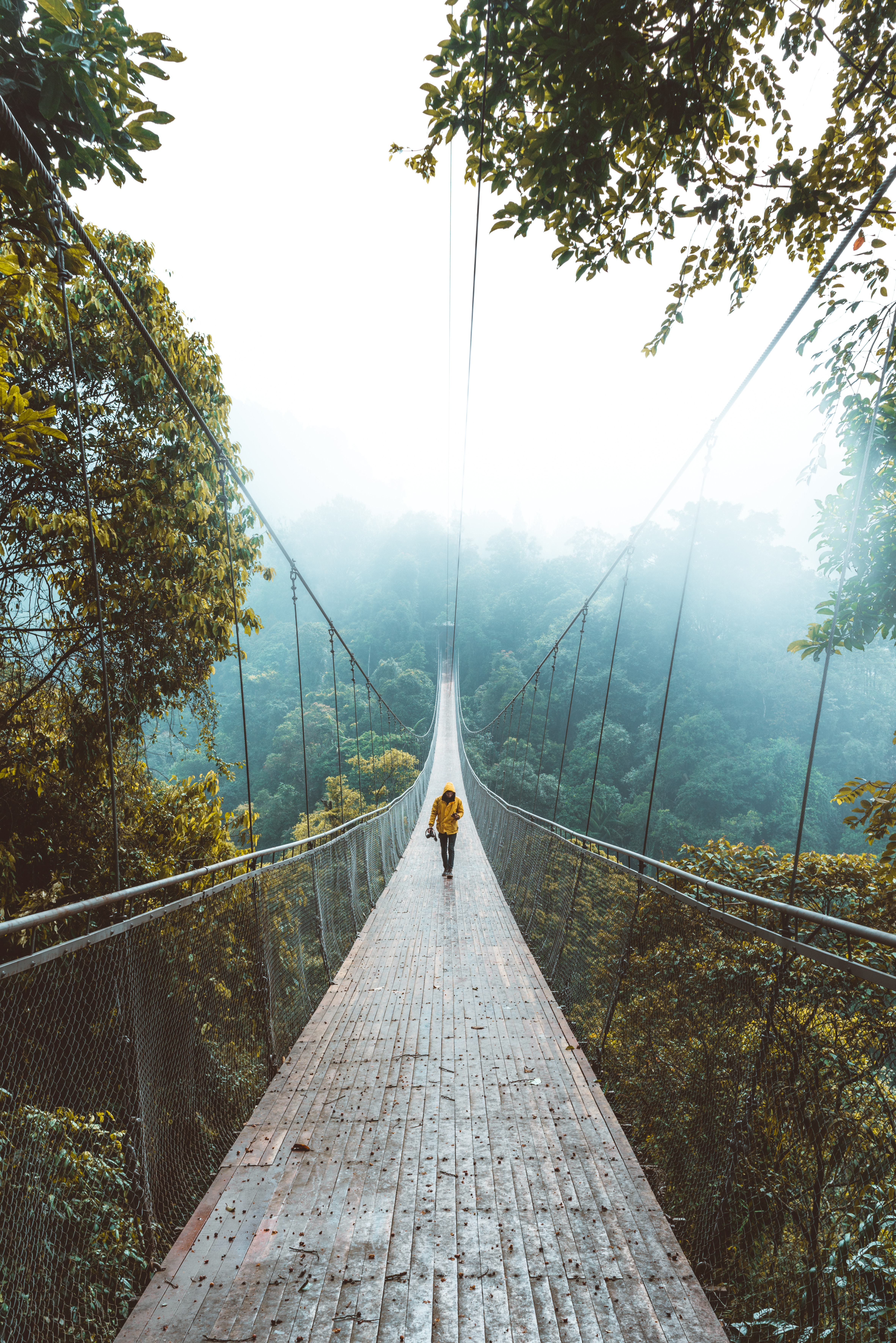 86529 download wallpaper Nature, Bridge, Suspension Bridge, Loneliness, Stroll, Forest screensavers and pictures for free
