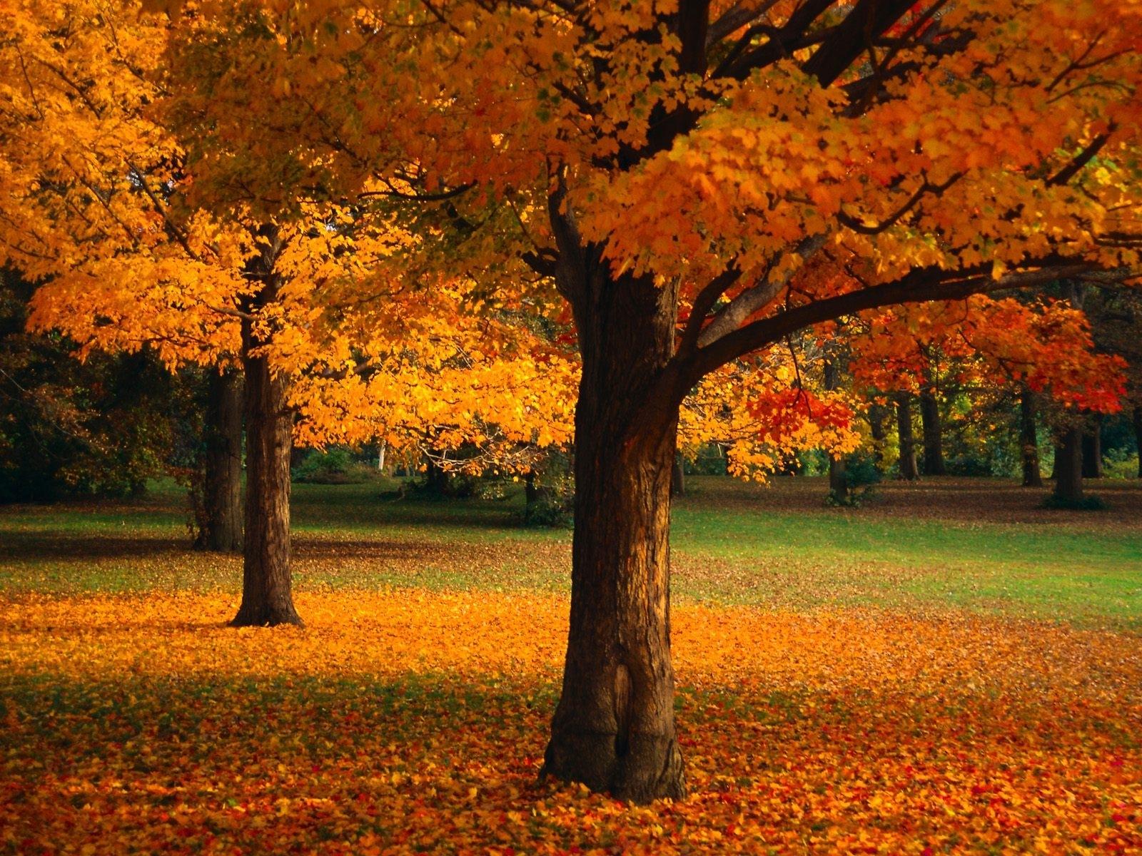 3237 скачать обои Пейзаж, Деревья, Осень - заставки и картинки бесплатно