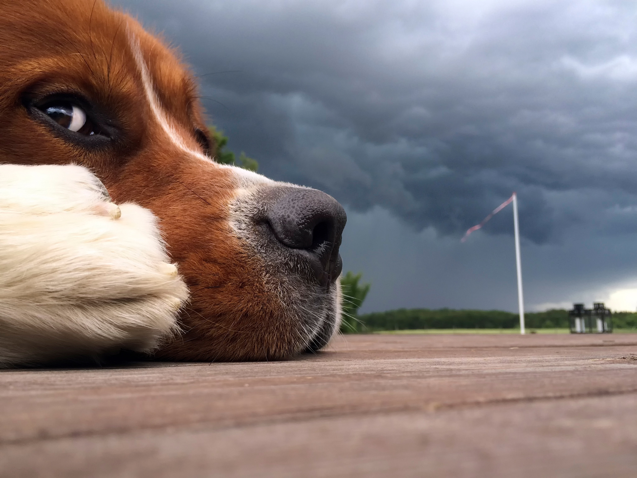 99547 Screensavers and Wallpapers Nose for phone. Download Animals, Sky, Clouds, Dog, Muzzle, Nose pictures for free