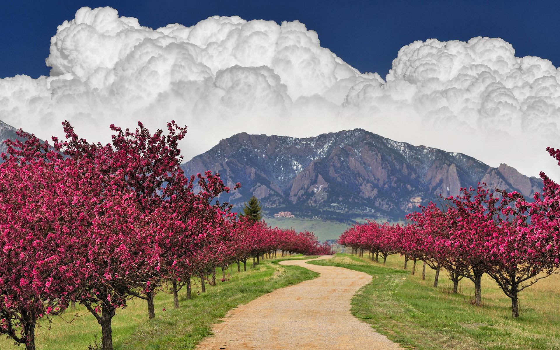 15299 скачать обои Пейзаж, Деревья, Дороги, Горы, Облака - заставки и картинки бесплатно