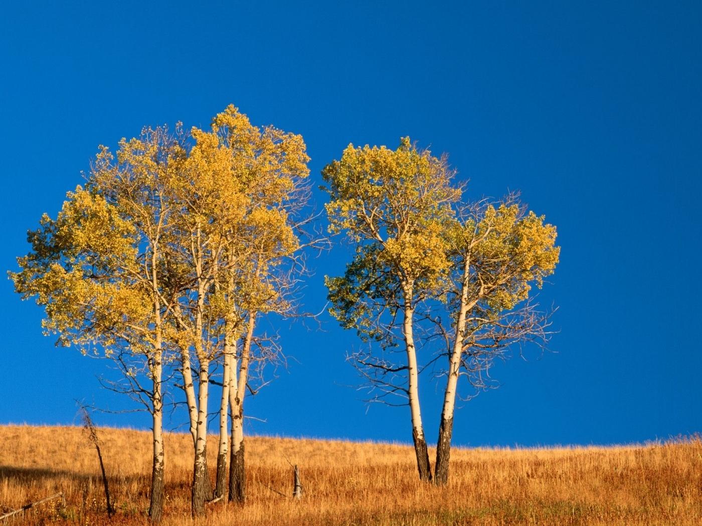 24525 скачать обои Пейзаж, Деревья, Поля, Небо, Осень - заставки и картинки бесплатно