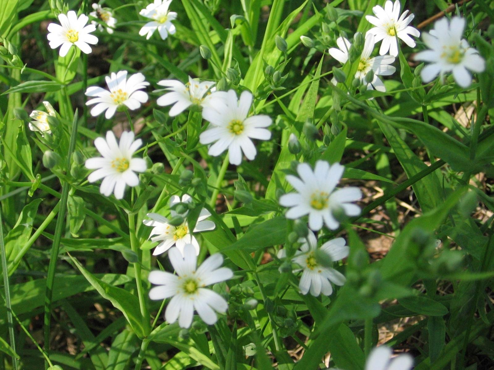 3080 скачать обои Растения, Цветы - заставки и картинки бесплатно