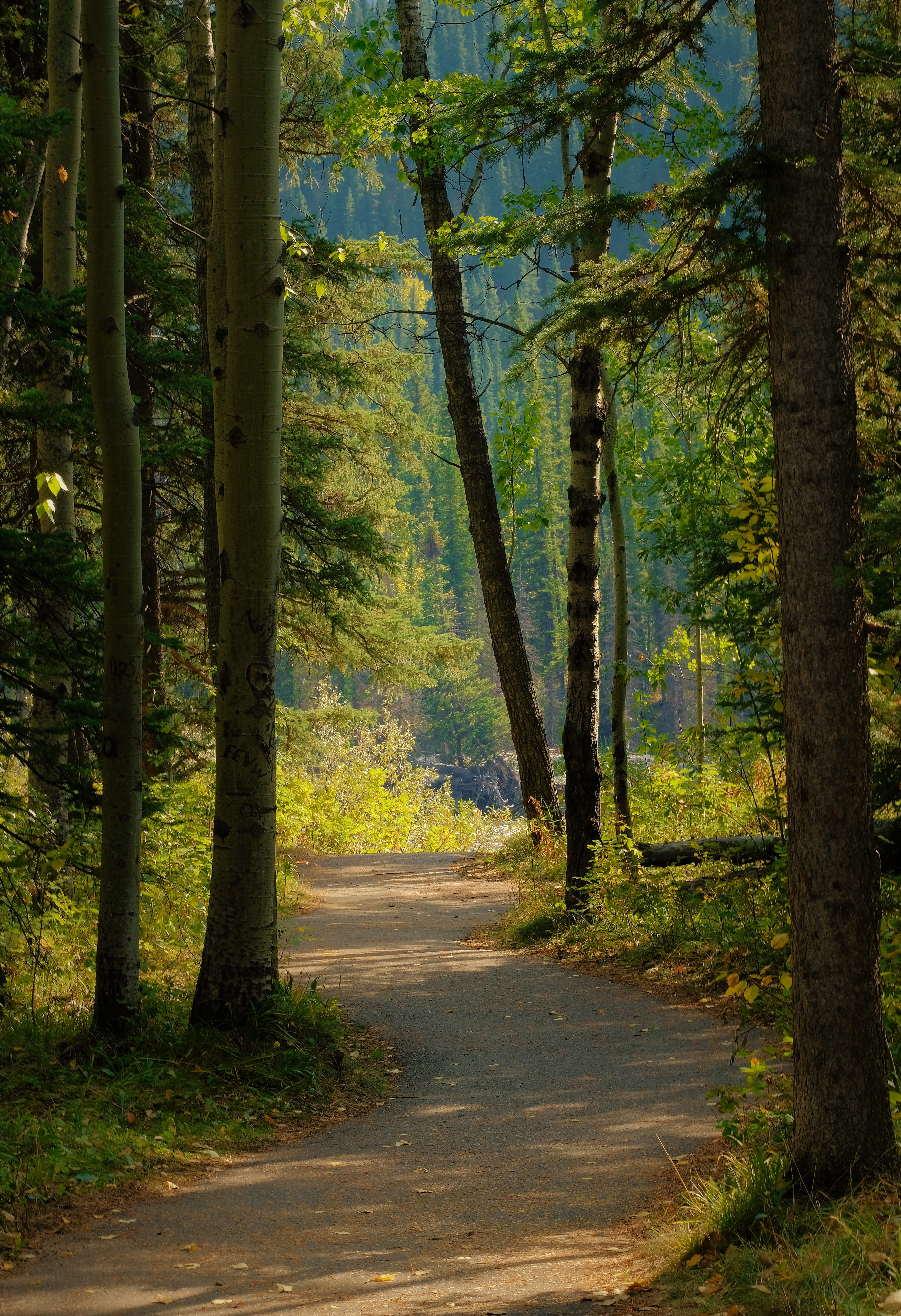 129170 download wallpaper Forest, Nature, Road, Path screensavers and pictures for free
