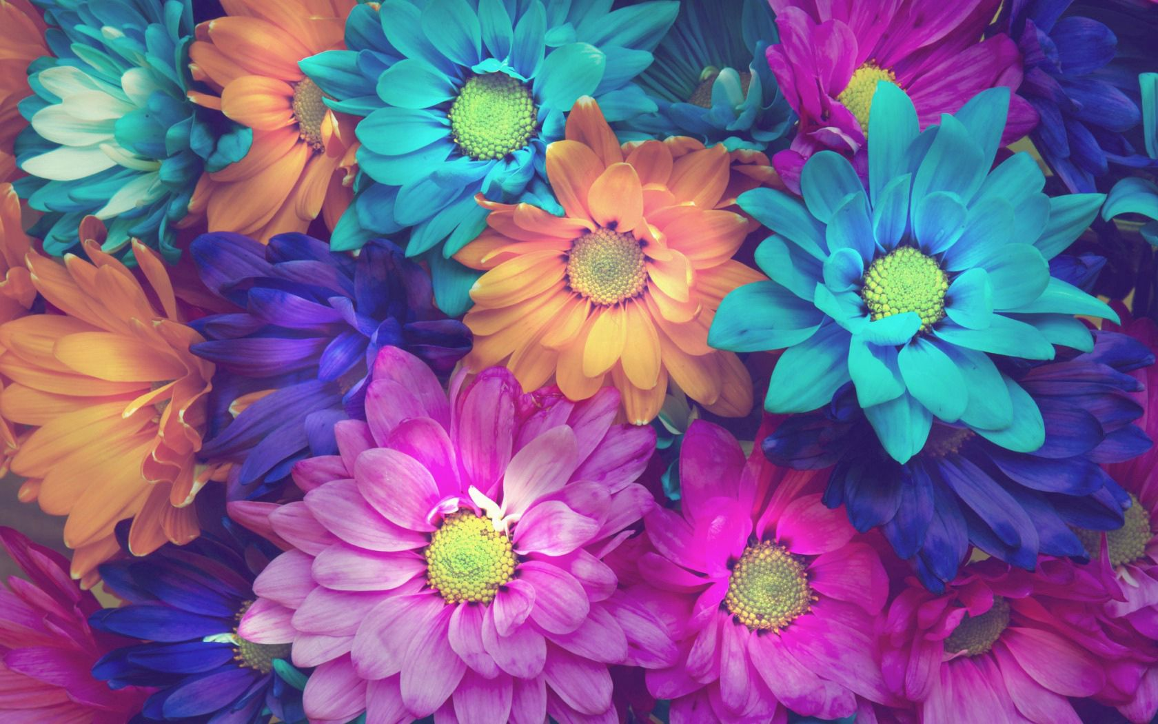 129351 Screensavers and Wallpapers Petals for phone. Download Flowers, Multicolored, Motley, Petals pictures for free