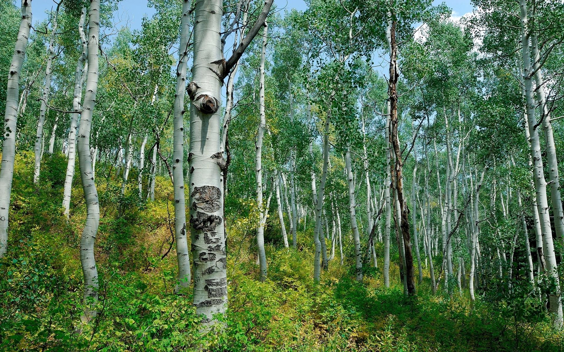 3731 скачать обои Пейзаж, Деревья - заставки и картинки бесплатно