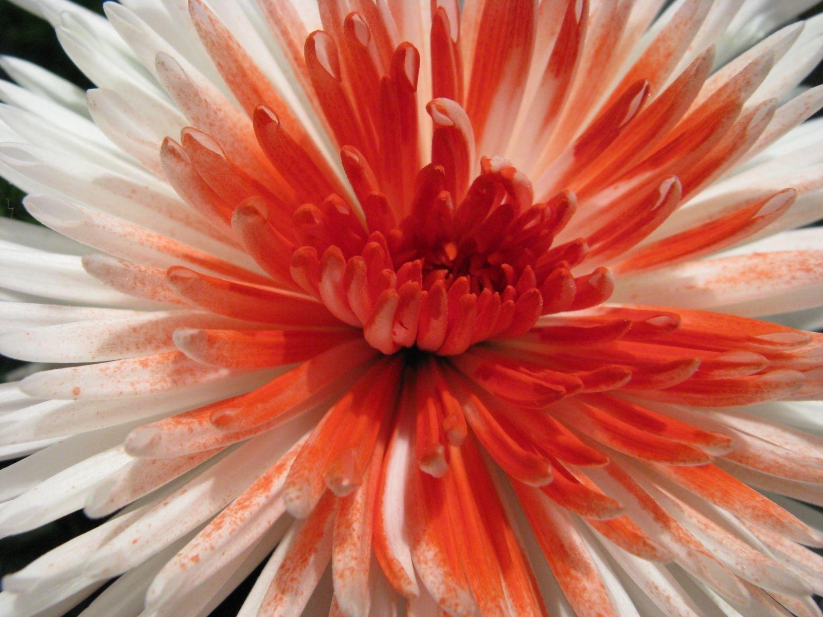 5335 скачать обои Растения, Цветы - заставки и картинки бесплатно