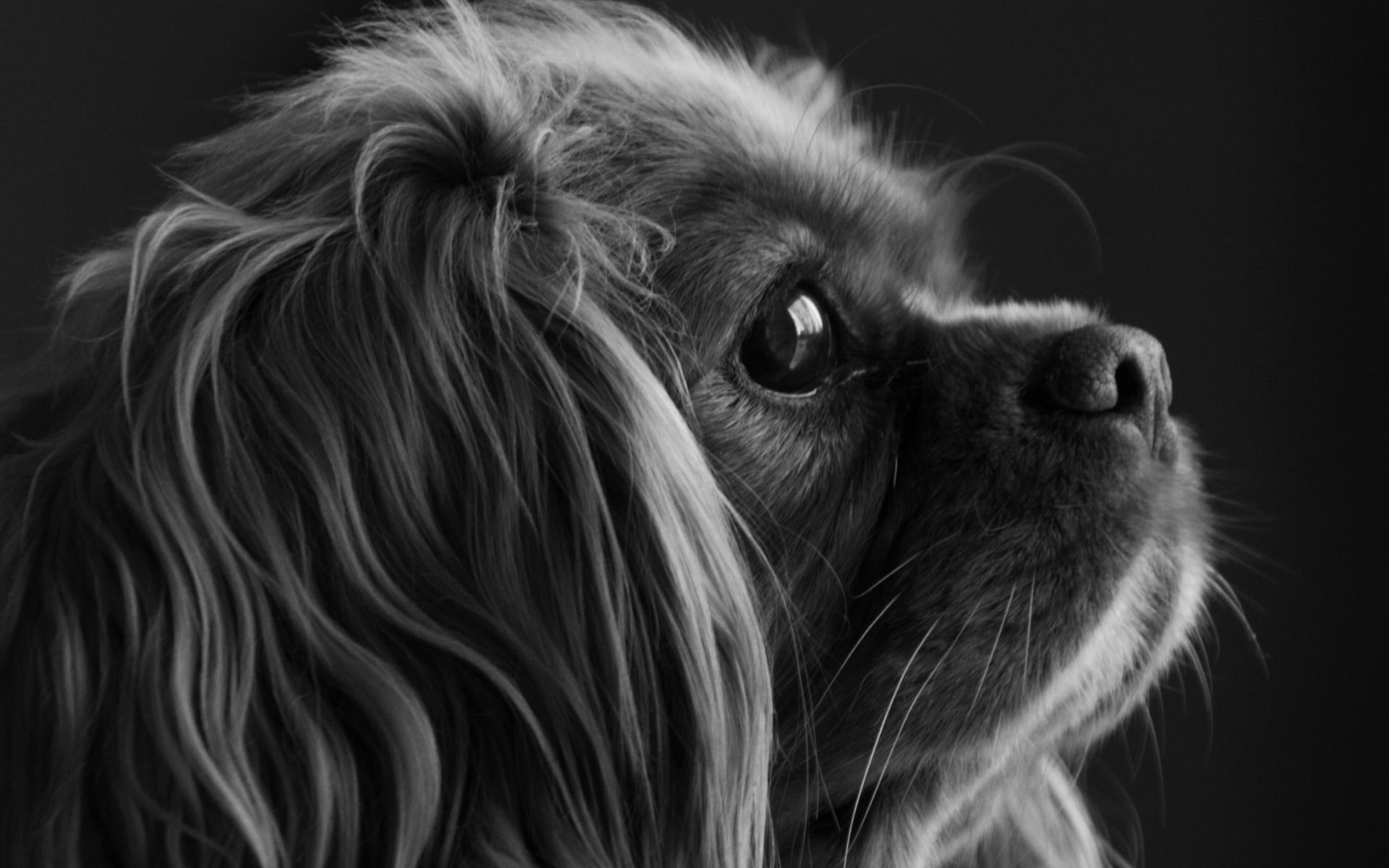 24134 скачать обои Животные, Собаки - заставки и картинки бесплатно