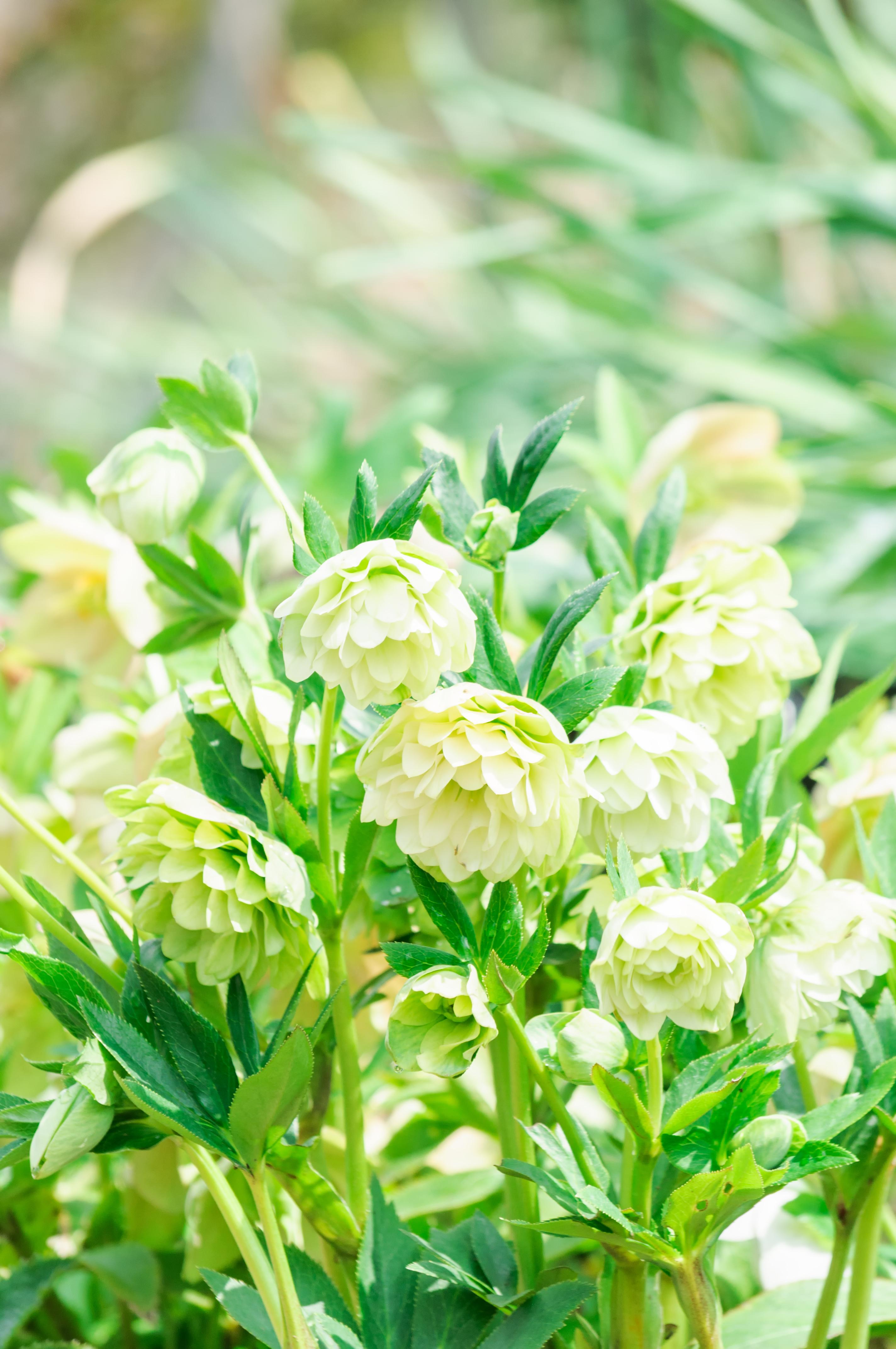75636 скачать обои Цветы, Белый, Зеленый, Цветение, Растения - заставки и картинки бесплатно