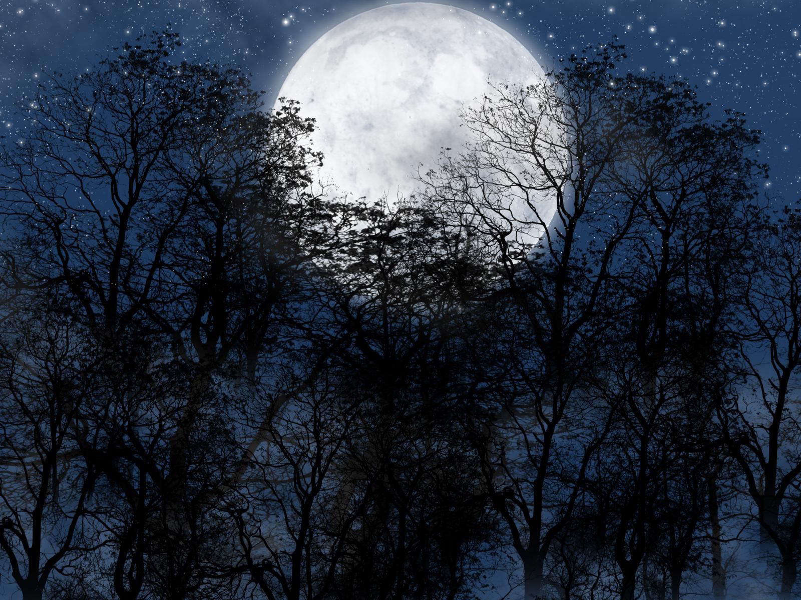 19322 免費下載壁紙 景观, 树, 夜, 月球 屏保和圖片