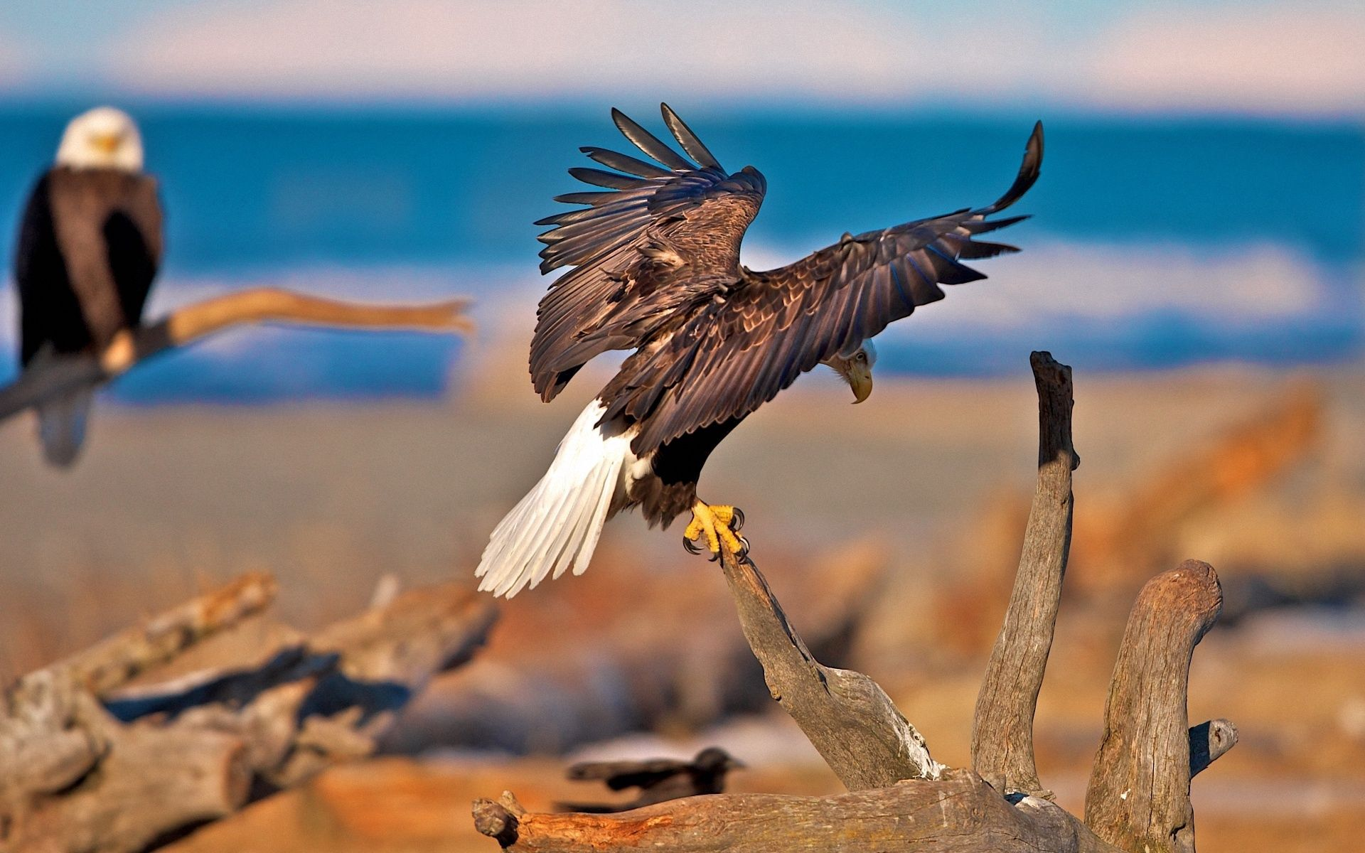75823 download wallpaper Animals, Branches, Sit, Sweep, Wave, Wings, Predators, Birds, Eagles screensavers and pictures for free