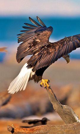 75823 baixar papel de parede Animais, Galhos, Ramos, Sentar, Varrer, Onda, Asas, Predadores, Aves, Eagles - protetores de tela e imagens gratuitamente