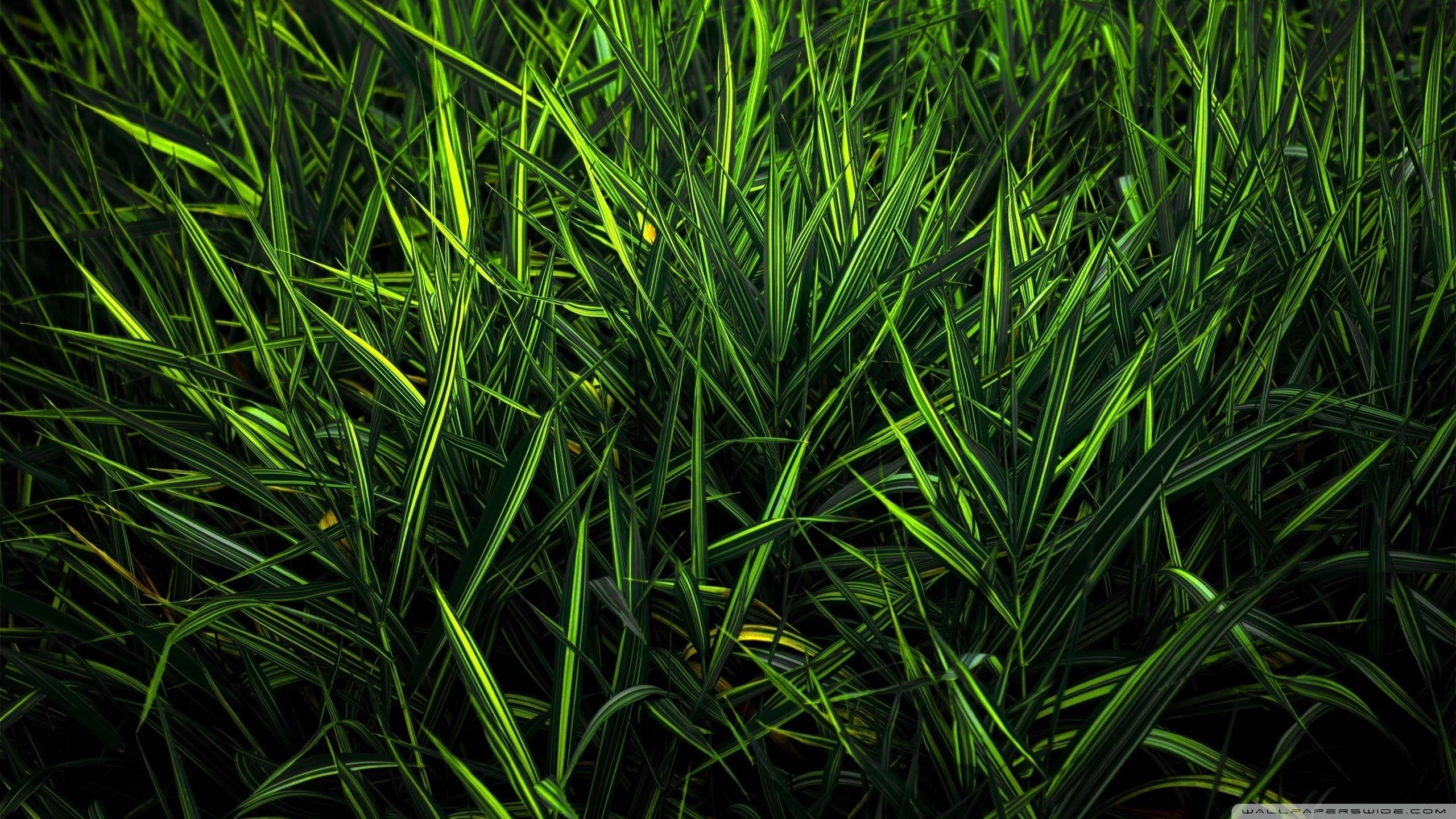 21439 скачать обои Растения, Трава - заставки и картинки бесплатно