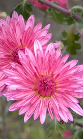 3523 descargar fondo de pantalla Plantas, Flores: protectores de pantalla e imágenes gratis