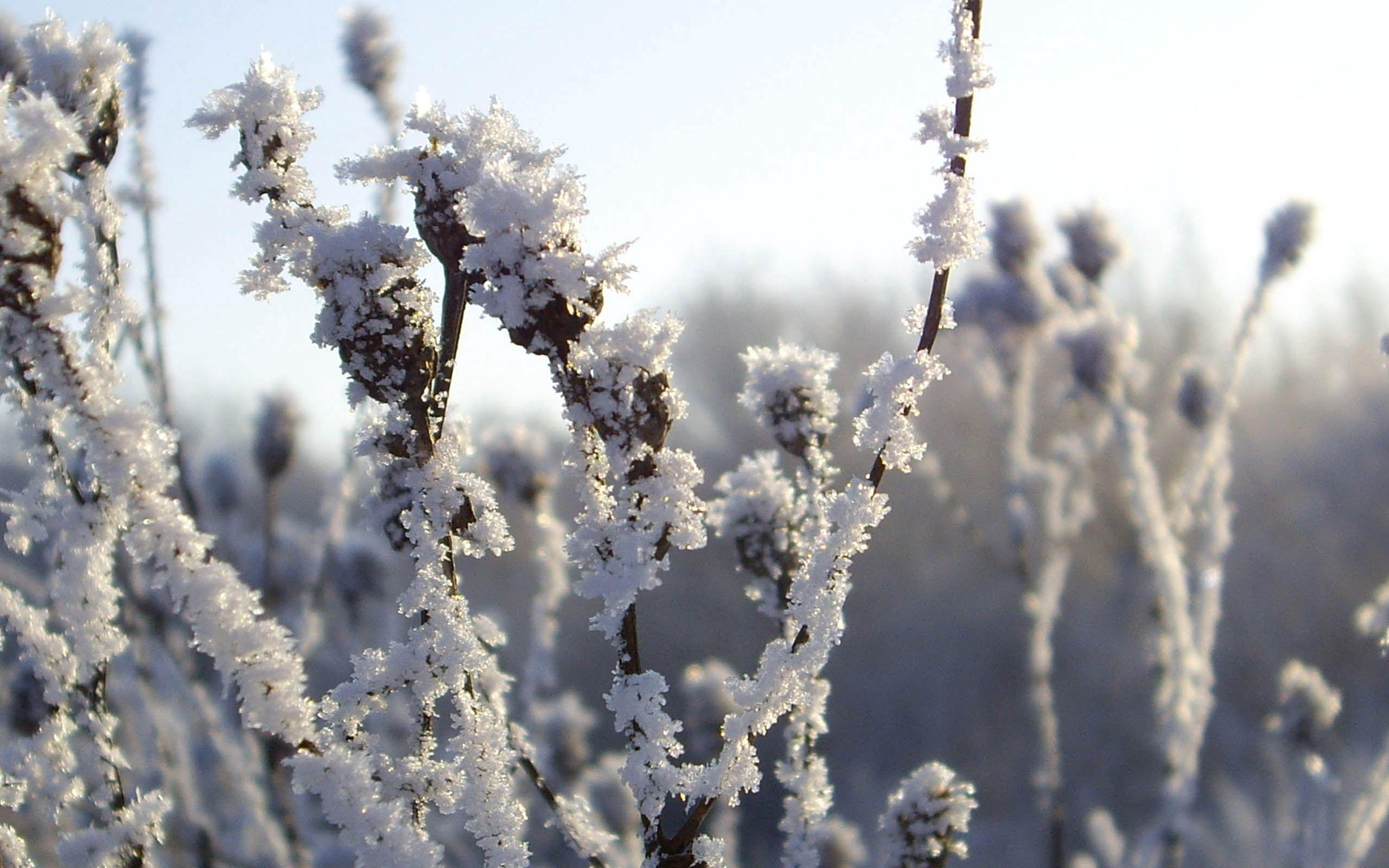 90553 скачать обои Природа, Иней, Снег, Зима, Лед, Холод, Кусты - заставки и картинки бесплатно