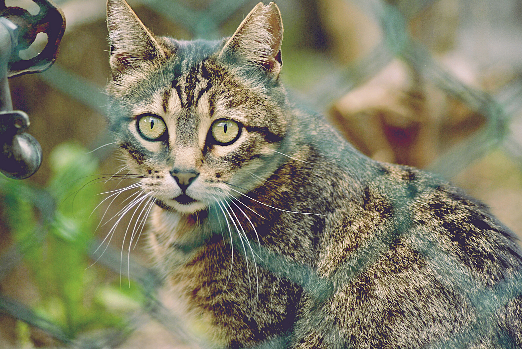 50747 download wallpaper Animals, Cat, Grid, Striped, Sight, Opinion screensavers and pictures for free