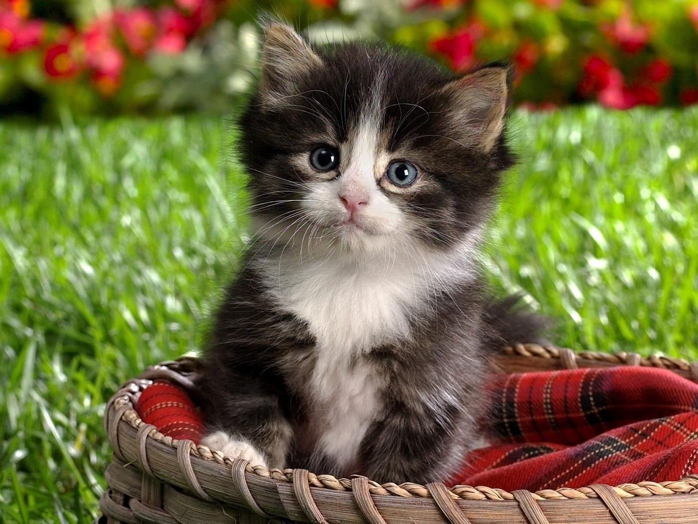 24921 скачать обои Кошки (Коты, Котики), Животные - заставки и картинки бесплатно
