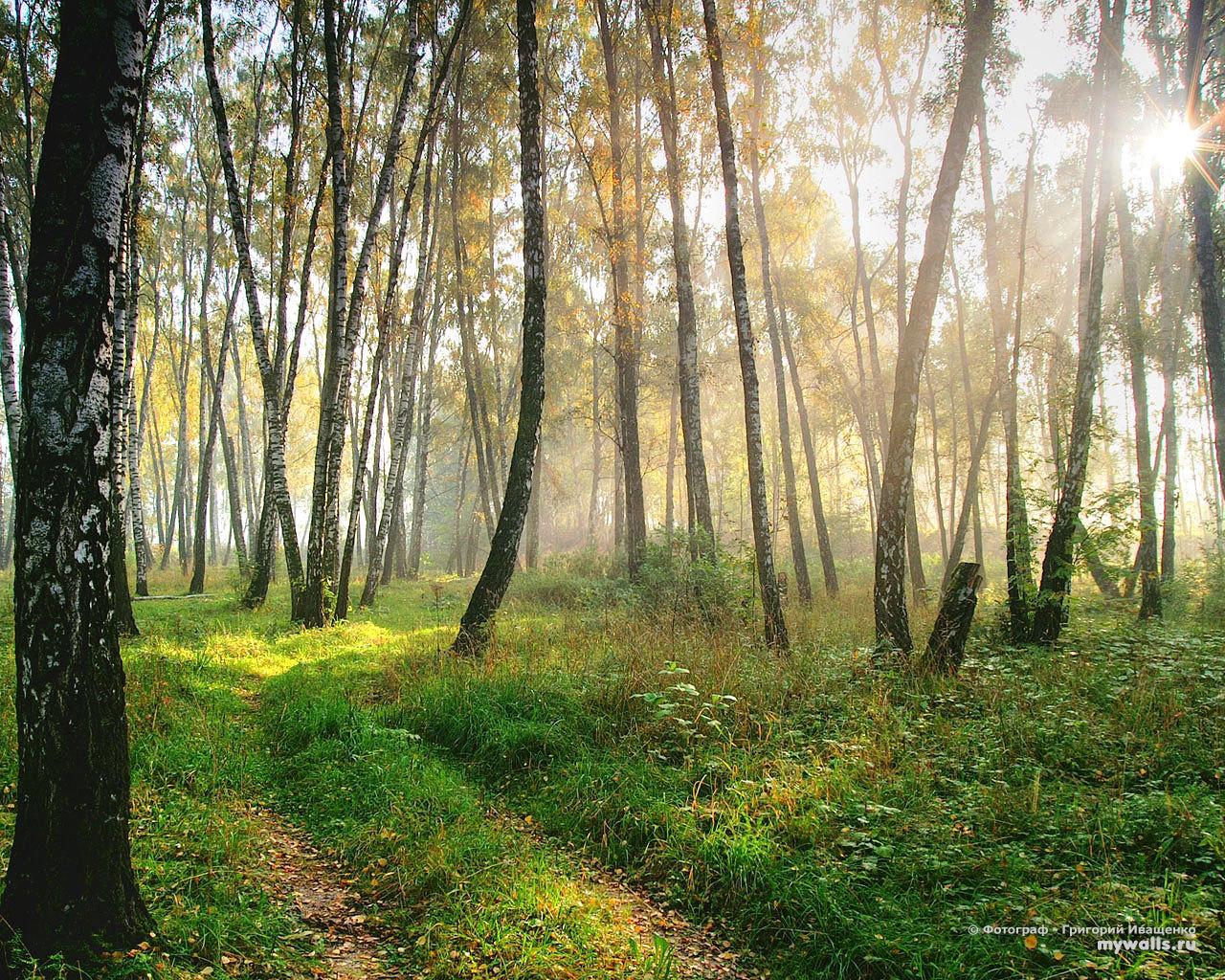 10869 скачать обои Пейзаж, Деревья, Трава, Дороги, Солнце - заставки и картинки бесплатно