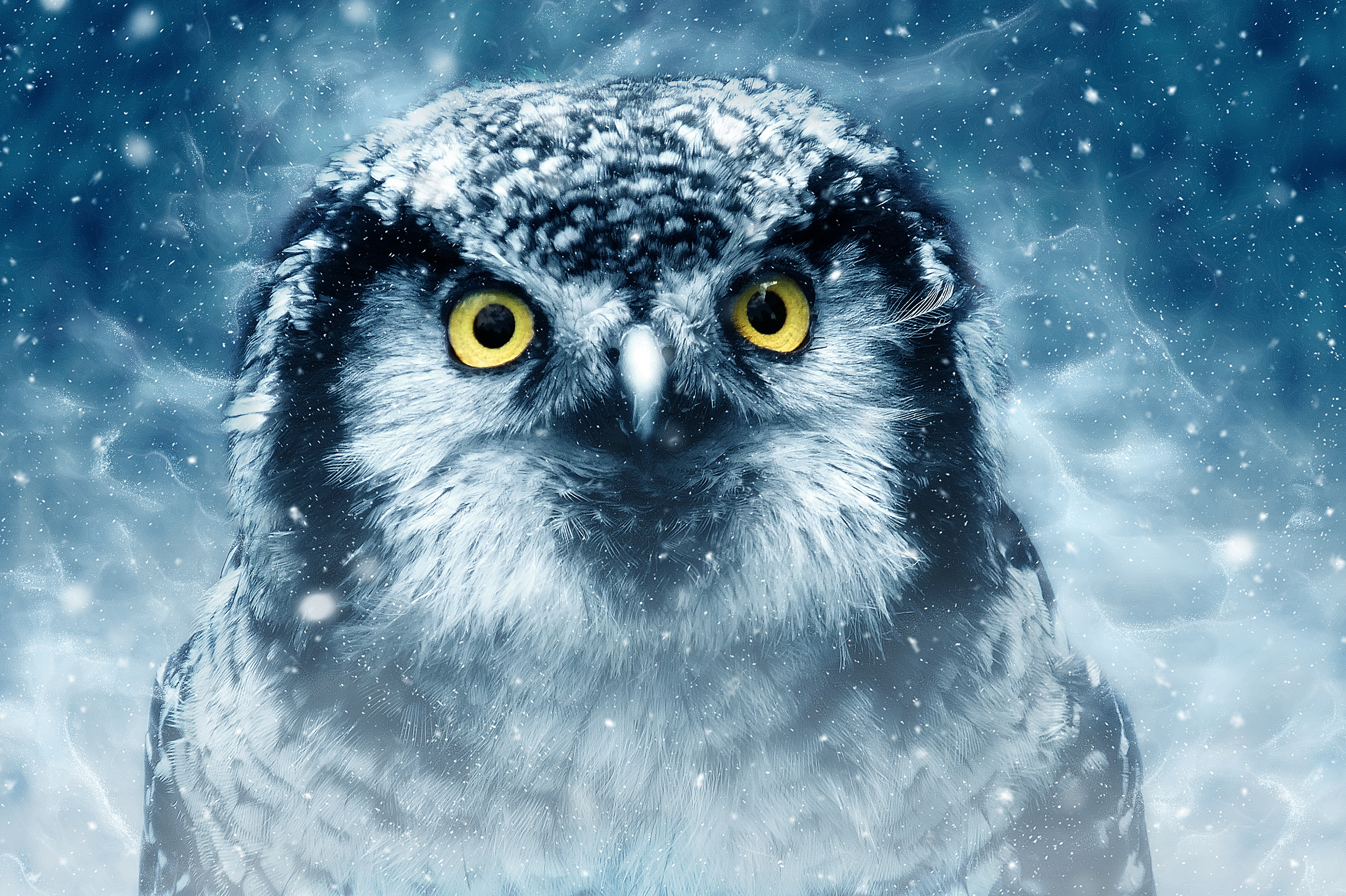 52872 download wallpaper Animals, Owl, Bird, Eyes, Looks, Close-Up, Predator, Wildlife screensavers and pictures for free