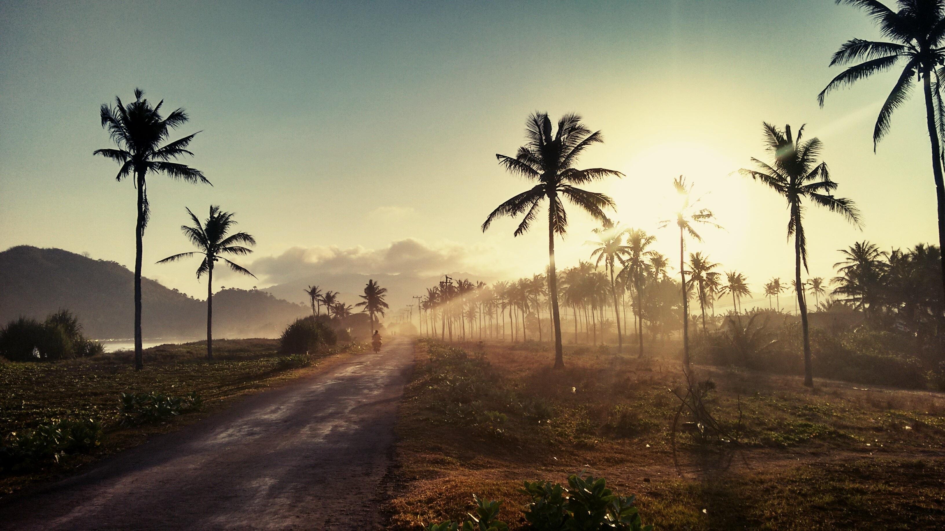 85671 免費下載壁紙 性质, 路, 日落, 棕榈 屏保和圖片