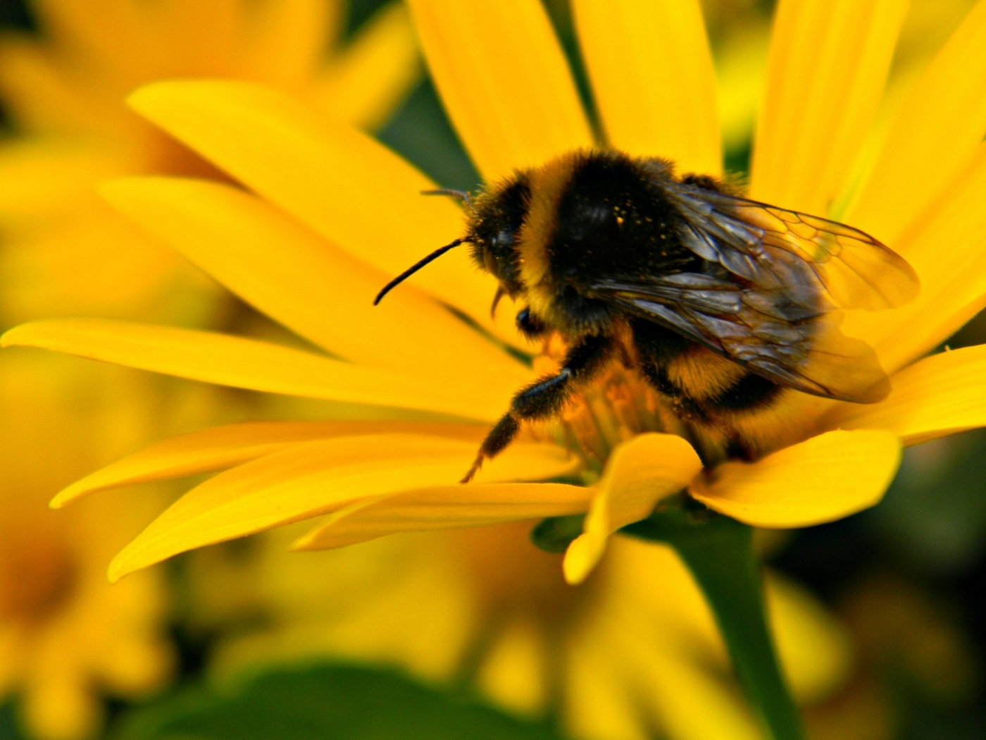 32338 Screensavers and Wallpapers Bees for phone. Download Insects, Bees pictures for free