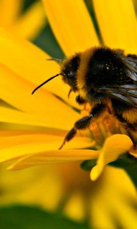 32338 Salvapantallas y fondos de pantalla Insectos en tu teléfono. Descarga imágenes de Insectos, Abejas gratis