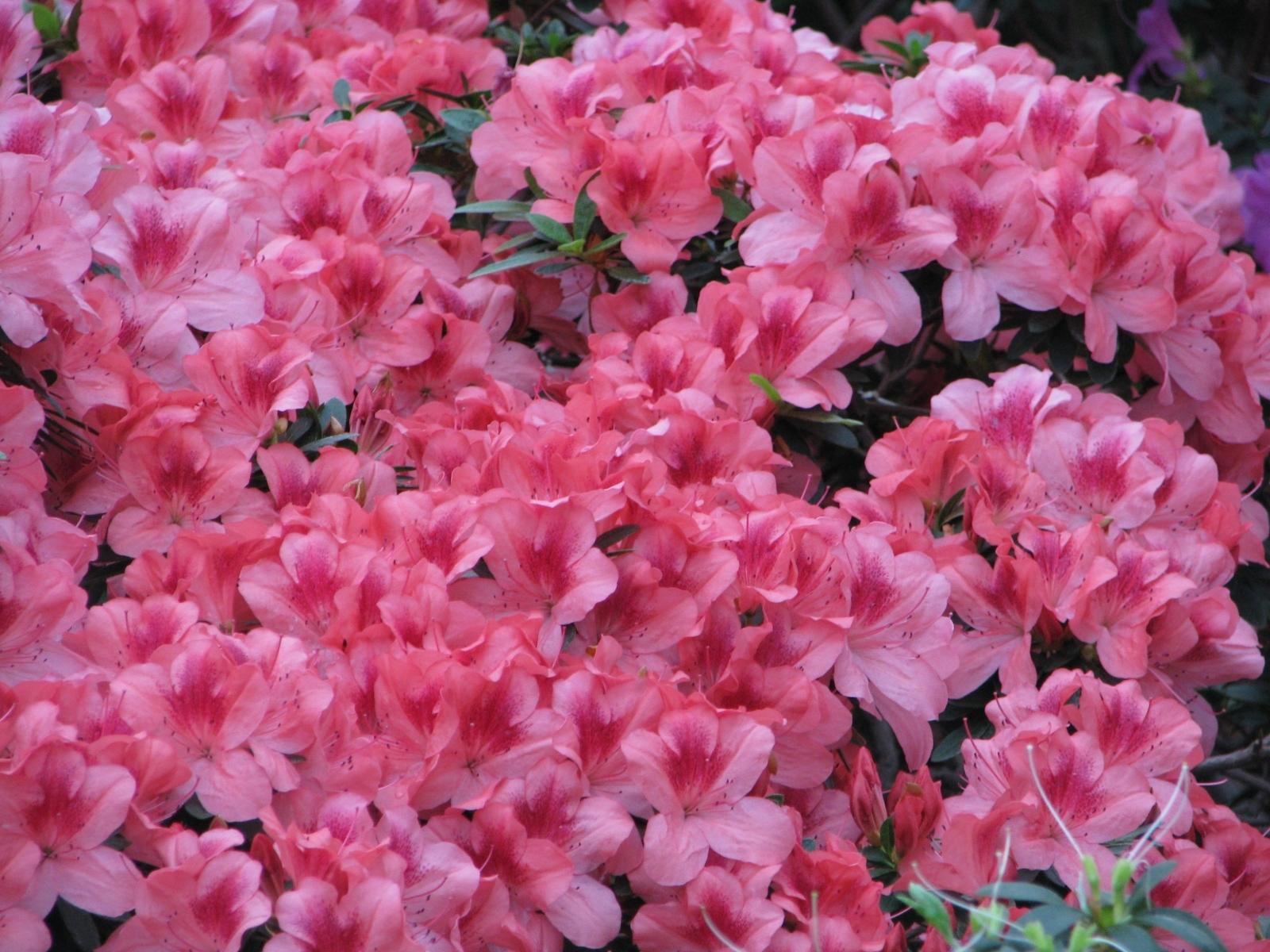 2426 скачать обои Растения, Цветы, Фон - заставки и картинки бесплатно