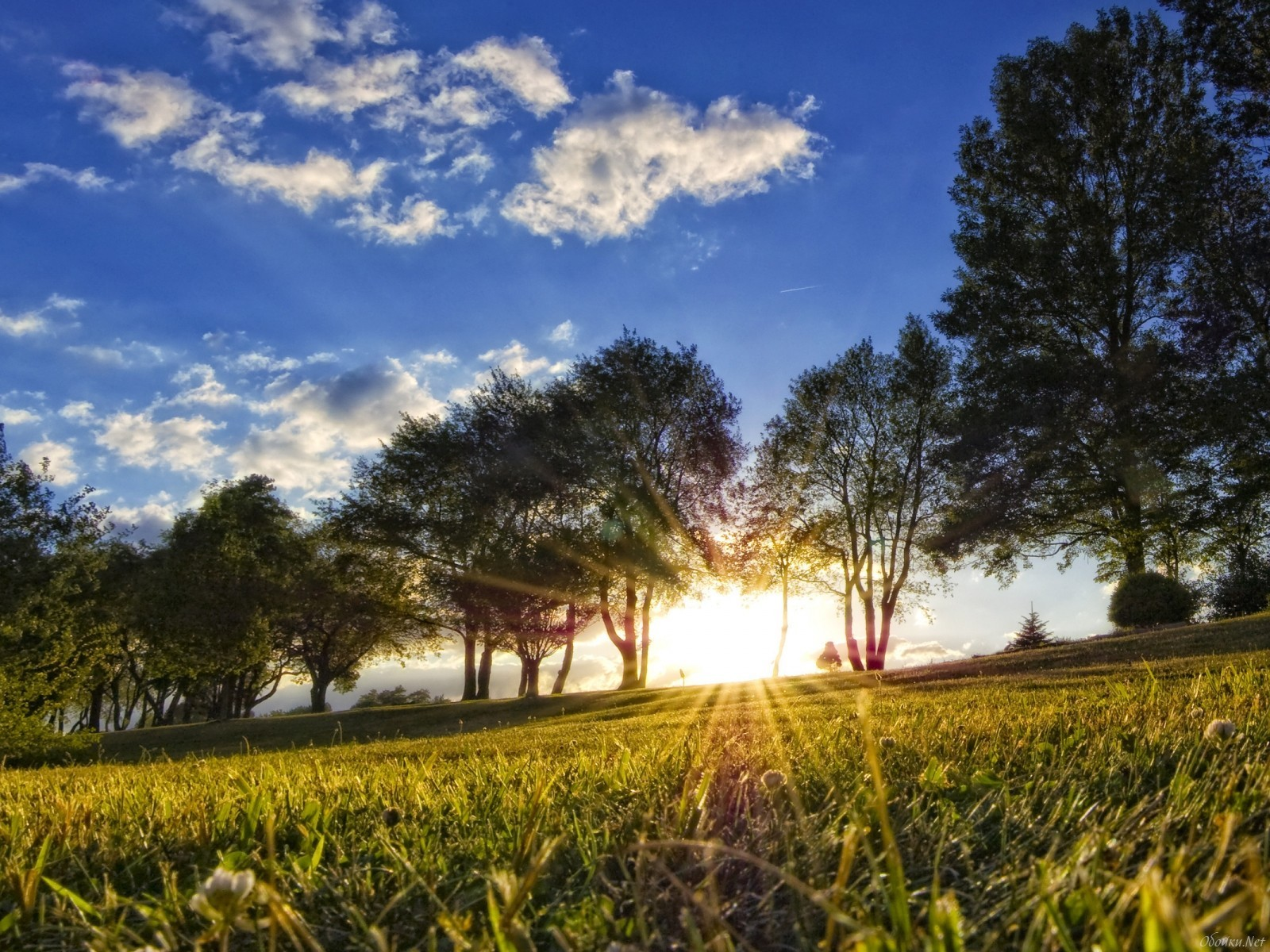 22951 скачать обои Пейзаж, Деревья, Трава, Небо, Солнце, Облака - заставки и картинки бесплатно