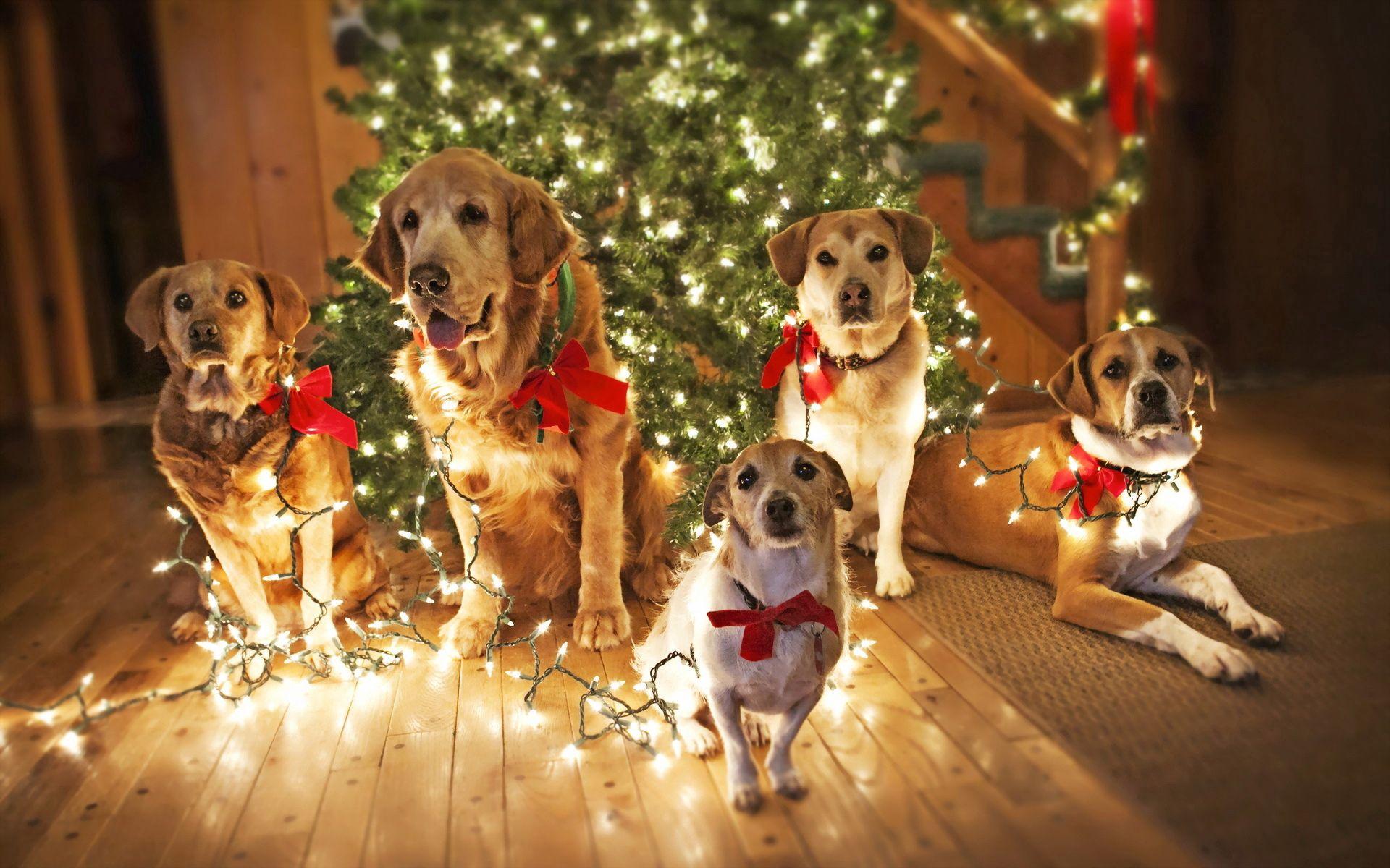 Скачать картинку Собаки, Животные, Праздник, Ёлка в телефон бесплатно.