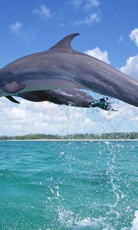 42631 baixar papel de parede Animais, Golfinhos, Mar - protetores de tela e imagens gratuitamente