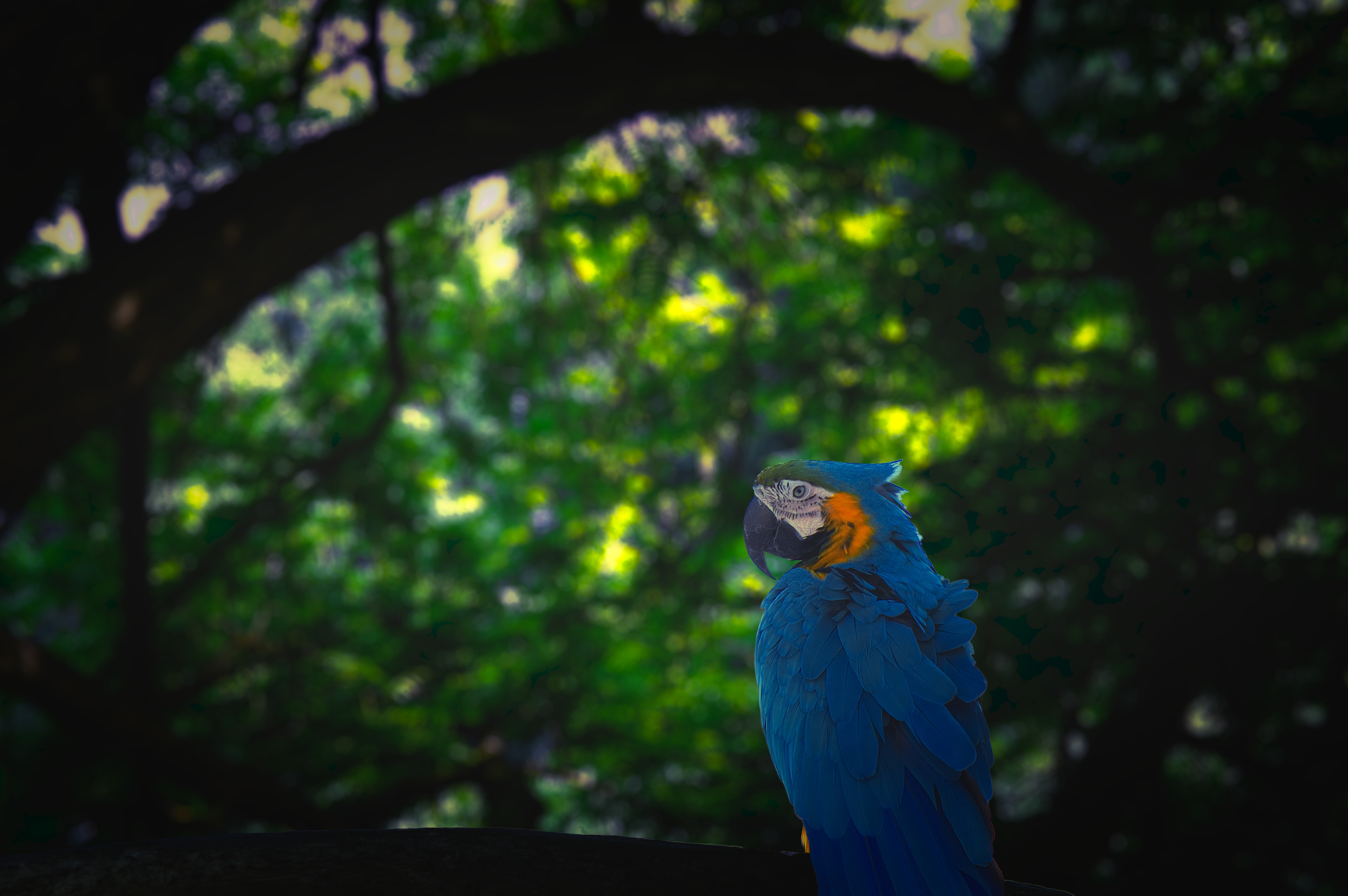 132829 download wallpaper Animals, Macaw, Parrots, Bird, Jungle screensavers and pictures for free