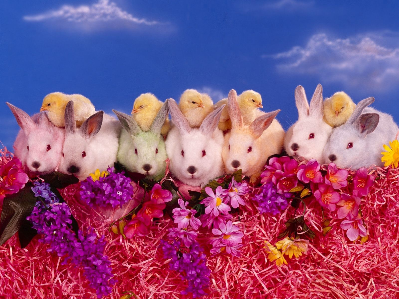 74894 download wallpaper Animals, Flowers, Rabbits, Chicks, Lots Of, Multitude screensavers and pictures for free